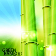 Link toVector bamboo design elements background 01