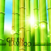 Link toVector bamboo design elements background 02
