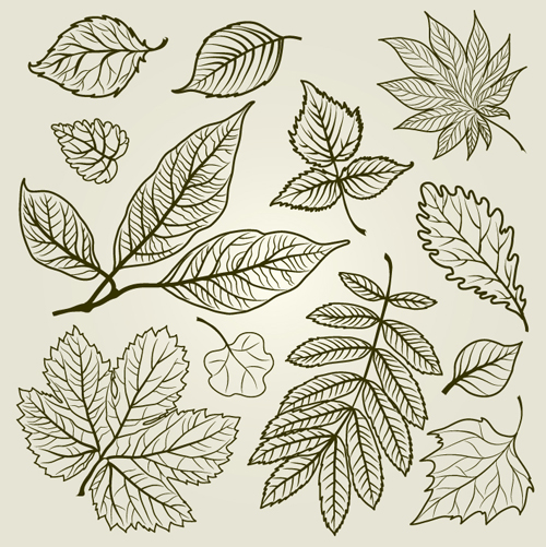 Hand drawn Autumn Leafs vector