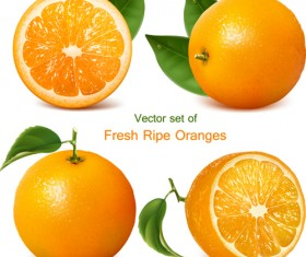 Set of Realistic Fruit elements vector 02