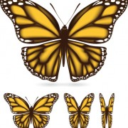Link toDifferent color butterfly sample vector 01