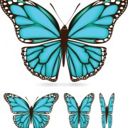 Link toDifferent color butterfly sample vector 03