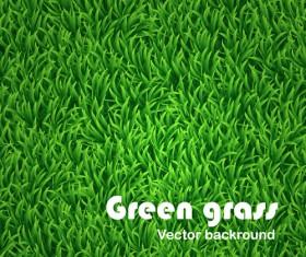 Green Grass background 01
