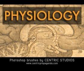 Physiology Photoshop Brushes