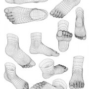 Link to3d model of human foot style vector
