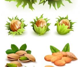 Green nuts design vector