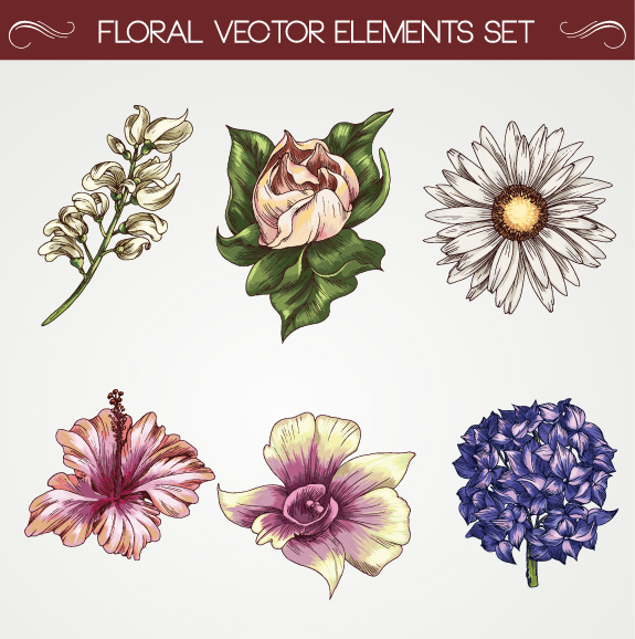 Set of Vintage flowers vector 01 - Vector Flower free download