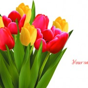 Link toVivid tulips backgrounds vector 01