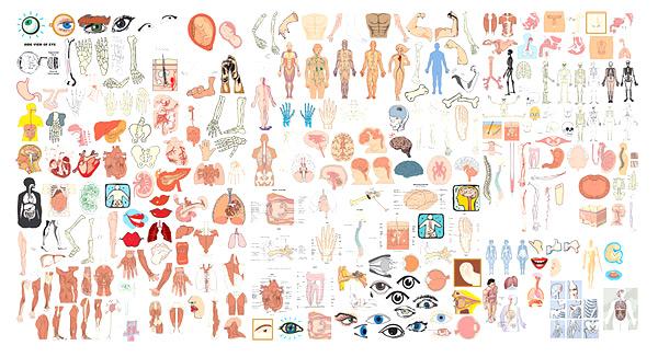 Human Body Vector Free Human Body Organs Vector