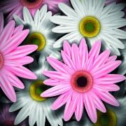 Link toVintage flowers illustration vector 01