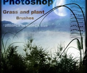 Grass and Plant Photoshop Brushes