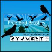 Link toBird photoshop brushes