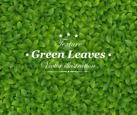 Green Leaves design vector