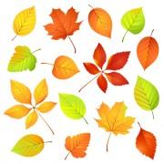 Link toColored leaf vector set 01