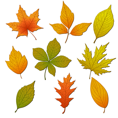 Bright autumn leaves vector backgrounds 01