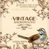 Huge collection of Vintage background vector 05