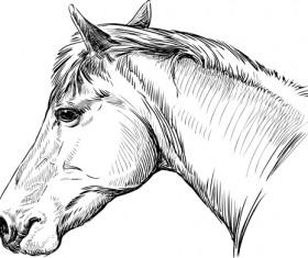 Draw horses vector 02