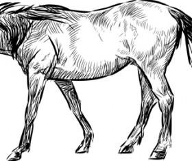 Draw horses vector 03