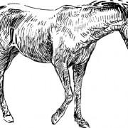 Link toDraw horses vector 04