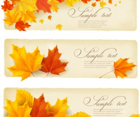 Maple Leaf banners vector set 03