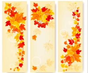 Maple Leaf banners vector set 04