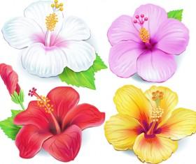 Beautiful flowers vector 04