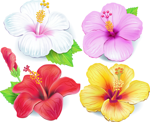 Beautiful flowers vector 04