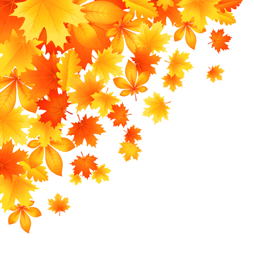 Beautiful autumn leaves vector 01 vector plant free download