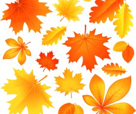 Beautiful autumn Leaves vector 02