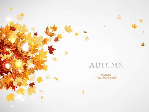 Vector Autumn Leaves Background Graphic 01 Vector