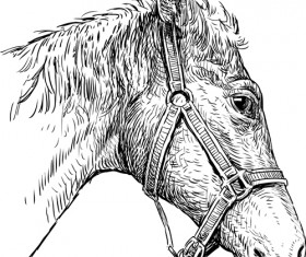 Hand drawn horse vector set 01