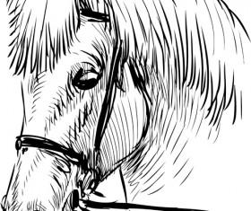Hand drawn horse vector set 02