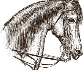 Hand drawn horse vector set 05
