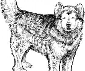 Hand drawn huskies dog vector 01