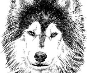 Hand drawn huskies dog vector 02