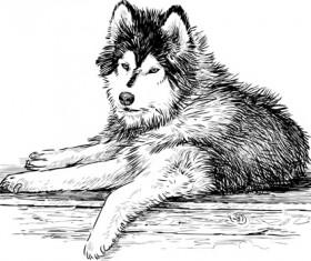 Hand drawn huskies dog vector 03