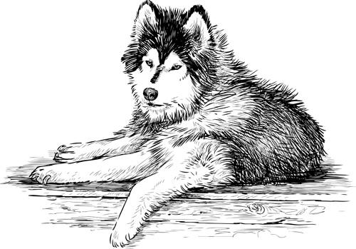 hand drawn huskies dog vector 03  vector animal free download