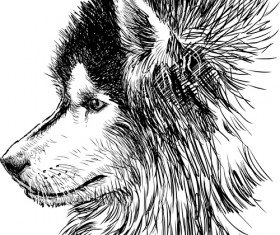 Hand drawn huskies dog vector 04