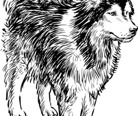 Hand drawn huskies dog vector 05