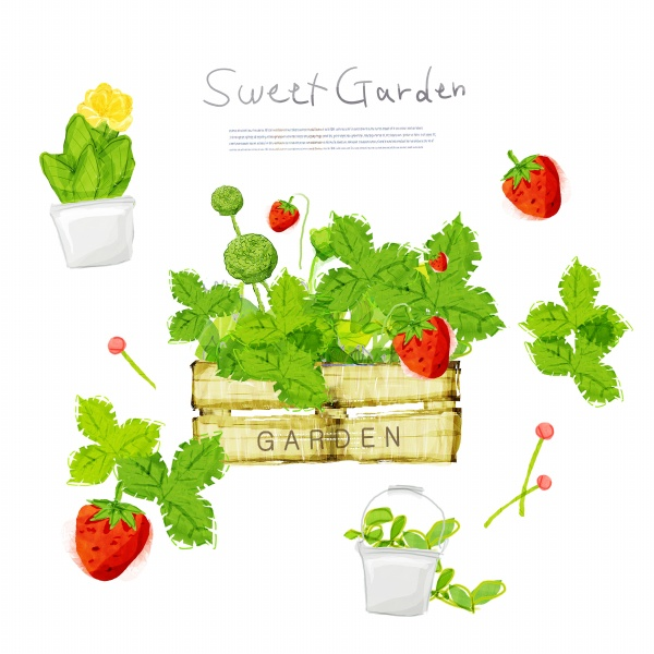 Hand draw strawberry psd material