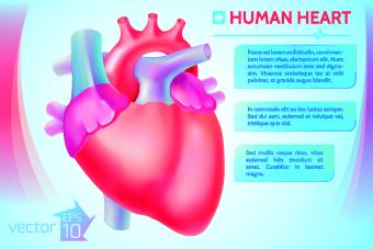 Human heart medical vector graphics 01