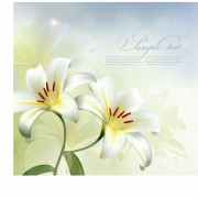 Link toBeautiful white flower vector background 01