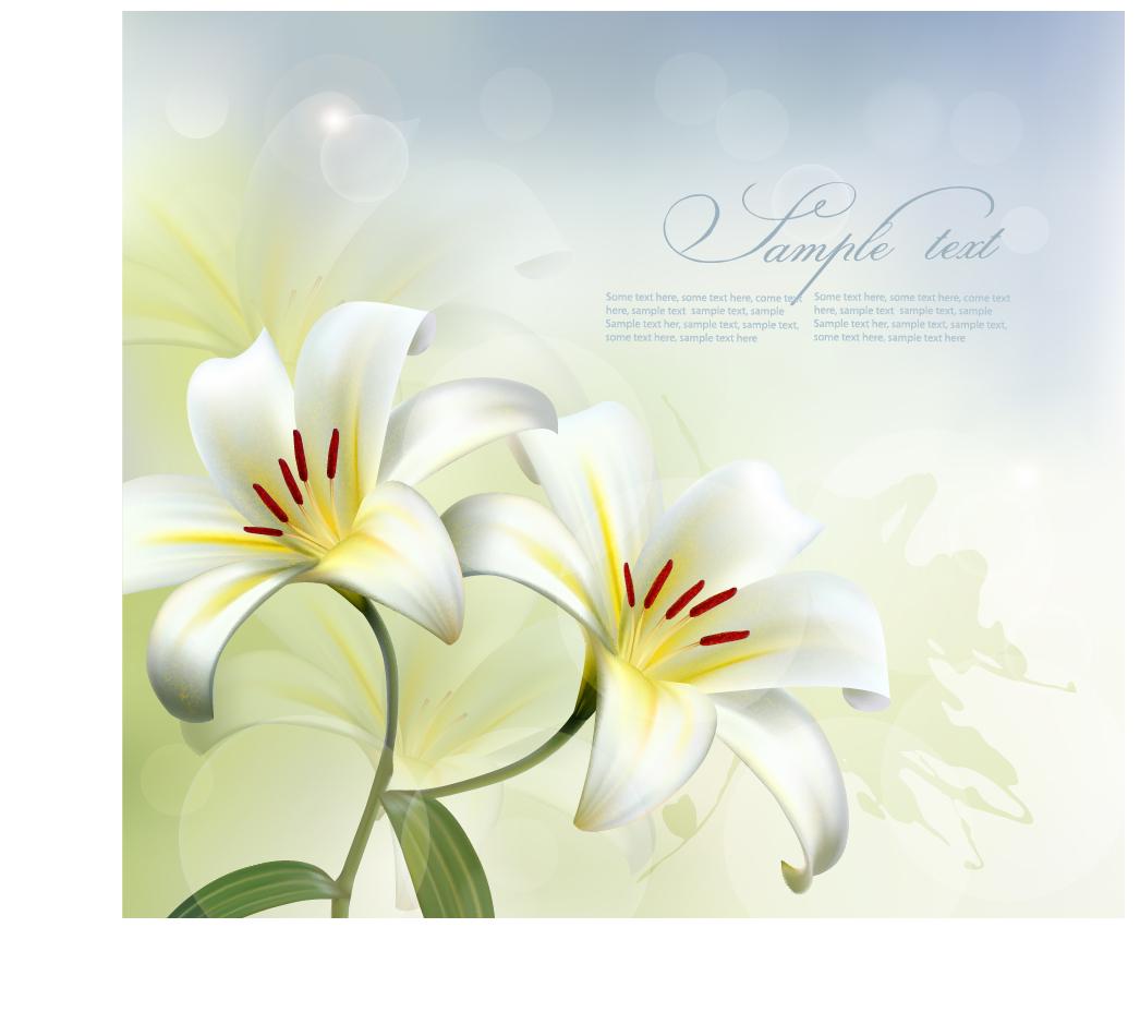 Beautiful white flower vector background 01 free download beautiful white flower vector background 01 izmirmasajfo