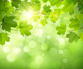 Sunlight and green leaf nature background 01