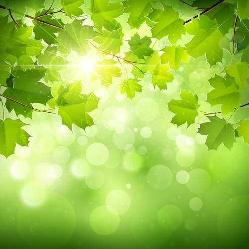 Spring Green Leaves And Flowers Background With Plants: Sunlight And Green Leaf Nature Background 01 Free Download