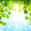 Sunlight and green leaf nature background 02