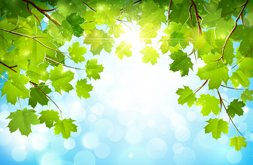 Background Images Nature leaf nature background
