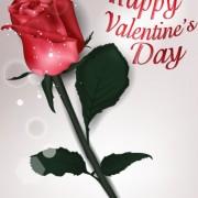Link toValentines day rose cards design vector 04