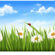 Link toBlue sky and grass summer background