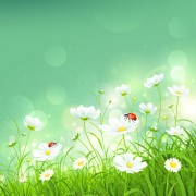 Link toCoccinella and white flower shiny background vector